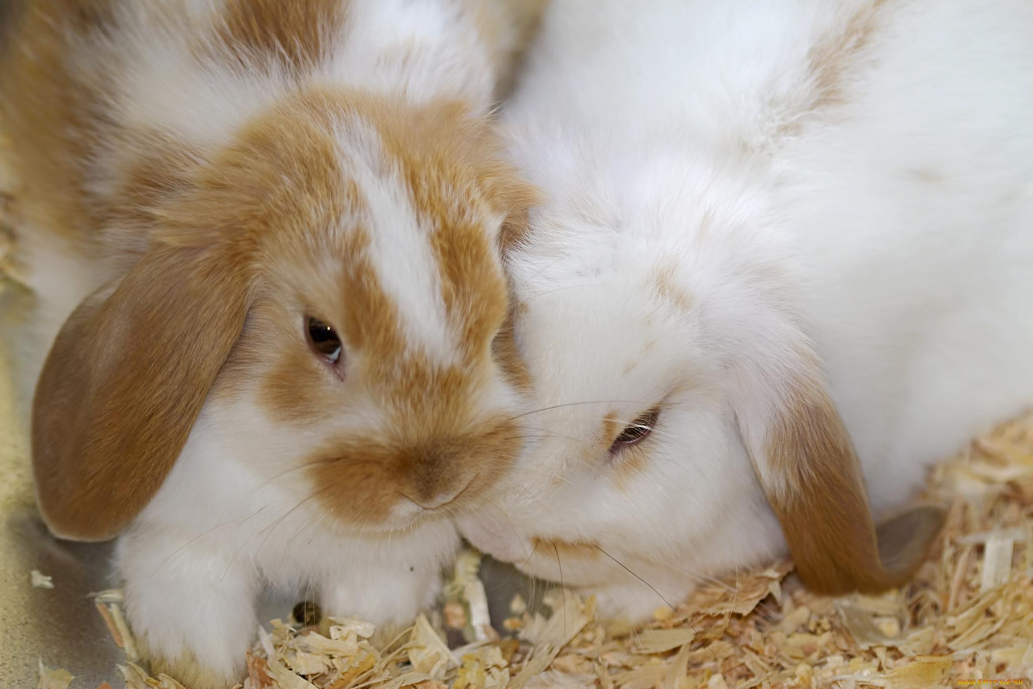 солнце кроссовер красивые открытки фото зайцы кролики была